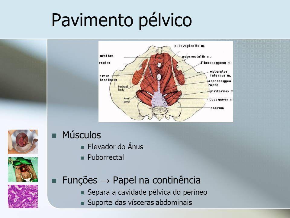 Pavimento pélvico Músculos Elevador do Ânus Puborrectal Funções Papel na continência Separa a cavidade pélvica do períneo Suporte das vísceras abdomin