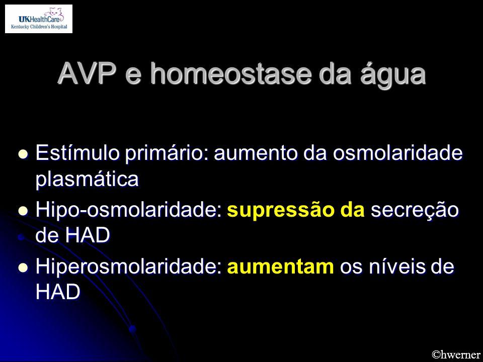 ©hwerner AVP e homeostase da água Estímulo primário: aumento da osmolaridade plasmática Estímulo primário: aumento da osmolaridade plasmática Hipo-osm