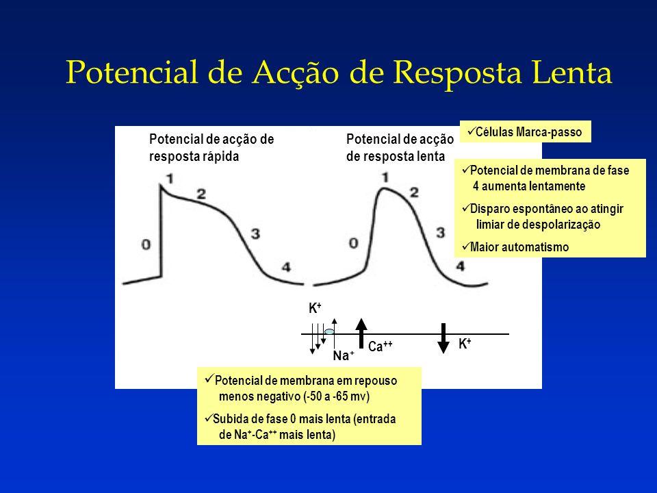 Potencial de acção de resposta rápida Potencial de acção de resposta lenta Na + K+K+ Ca ++ K+K+ Potencial de membrana de fase 4 aumenta lentamente Dis