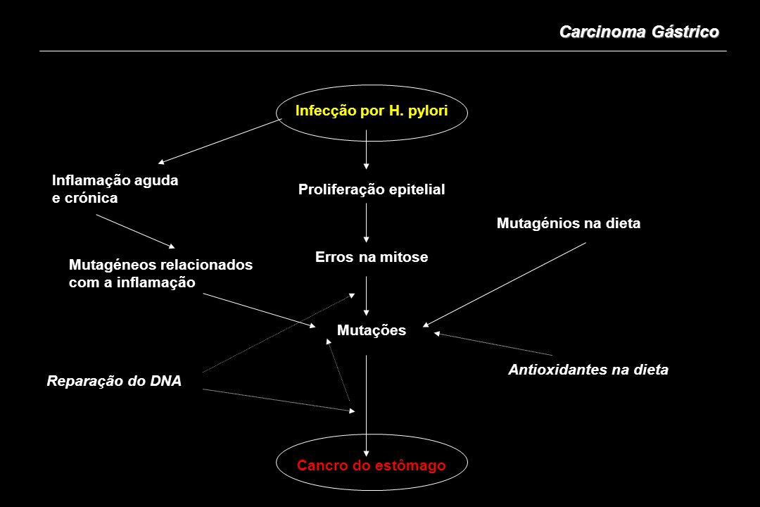 Carcinoma Gástrico Infecção por H. pylori Proliferação epitelial Erros na mitose Mutações Cancro do estômago Inflamação aguda e crónica Mutagéneos rel