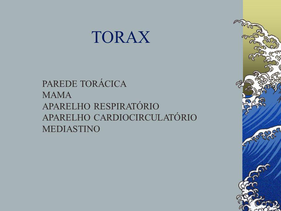 TORAX PAREDE TORÁCICA MAMA APARELHO RESPIRATÓRIO APARELHO CARDIOCIRCULATÓRIO MEDIASTINO