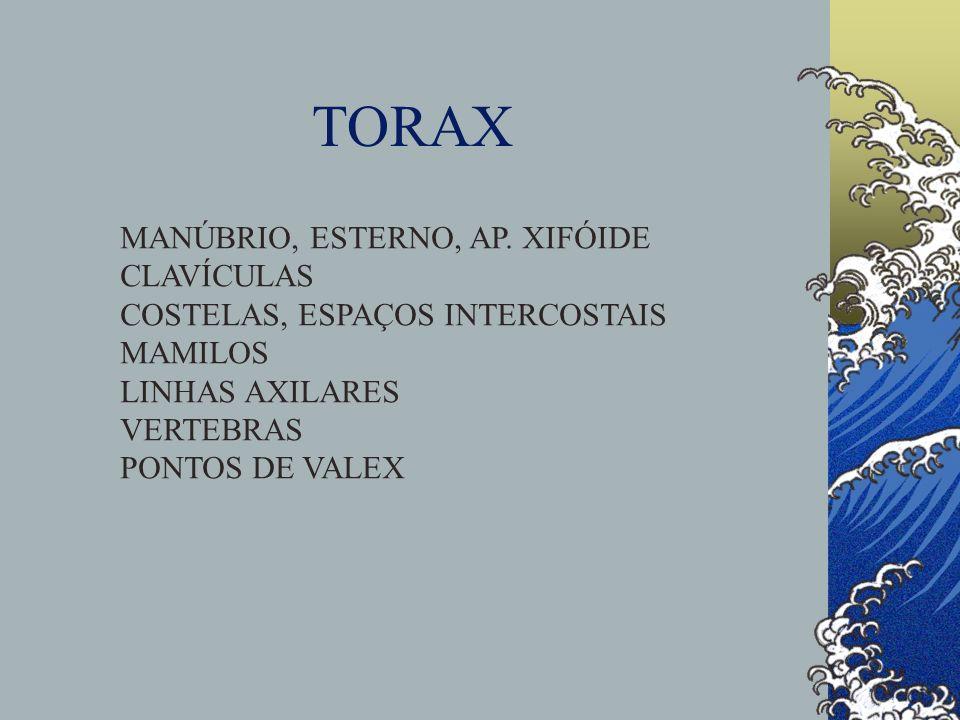 TORAX MANÚBRIO, ESTERNO, AP. XIFÓIDE CLAVÍCULAS COSTELAS, ESPAÇOS INTERCOSTAIS MAMILOS LINHAS AXILARES VERTEBRAS PONTOS DE VALEX