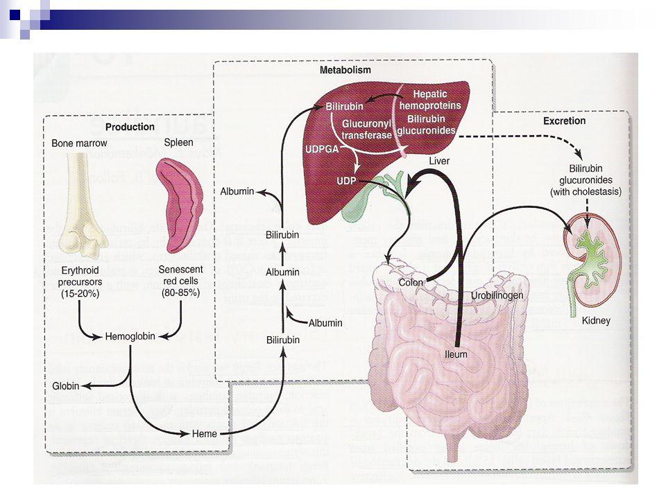 Tipos de Bilirrubina Não-conjugada / indirectaConjugada / directa LipofílicaHidrofílica Circula no plasma ligada à albumina (ligação reversível e não-covalente) Resulta da glicuronoconjugação da bilirrubina não-conjugada Passa a BHE Não é captada pelo rim Não passa a BHE Captada pelo rim (encontrada na urina em situações patológicas)
