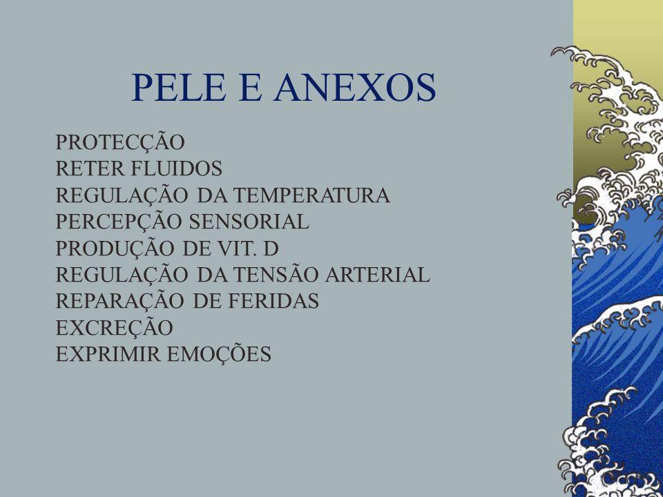PELE E ANEXOS PROTECÇÃO RETER FLUIDOS REGULAÇÃO DA TEMPERATURA PERCEPÇÃO SENSORIAL PRODUÇÃO DE VIT.
