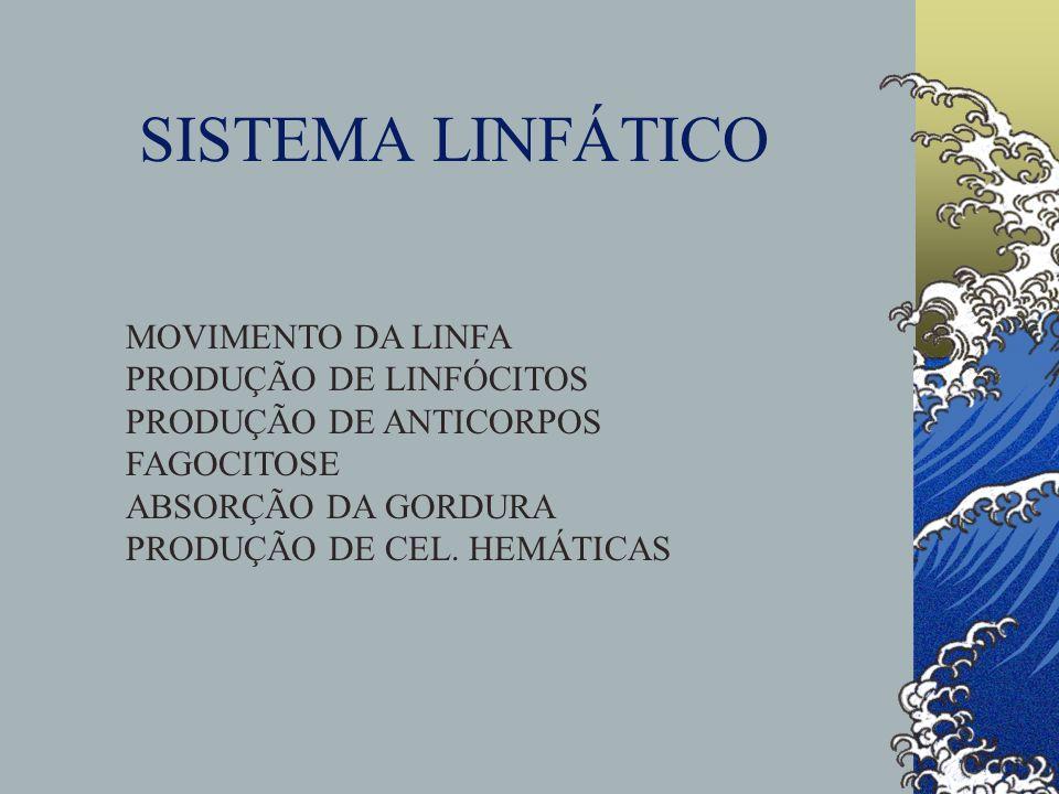 SISTEMA LINFÁTICO MOVIMENTO DA LINFA PRODUÇÃO DE LINFÓCITOS PRODUÇÃO DE ANTICORPOS FAGOCITOSE ABSORÇÃO DA GORDURA PRODUÇÃO DE CEL. HEMÁTICAS