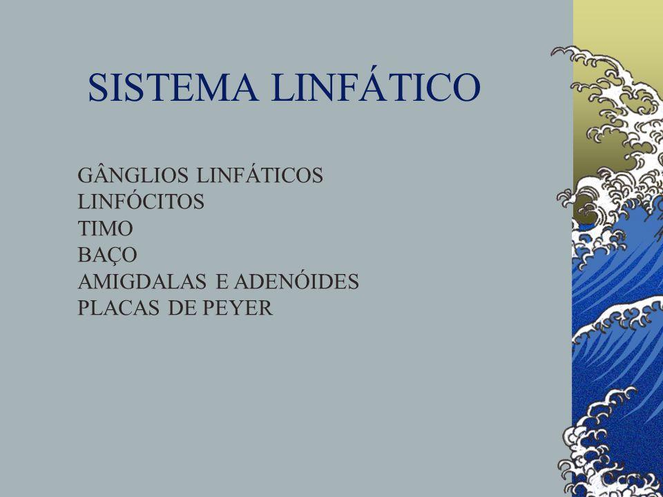 GÂNGLIOS LINFÁTICOS LINFÓCITOS TIMO BAÇO AMIGDALAS E ADENÓIDES PLACAS DE PEYER