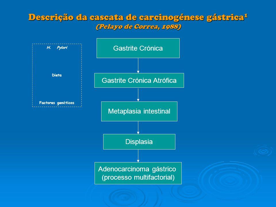 Descrição da cascata de carcinogénese gástrica 1 (Pelayo de Correa, 1988) Gastrite Crónica Gastrite Crónica Atrófica Metaplasia intestinal Displasia A
