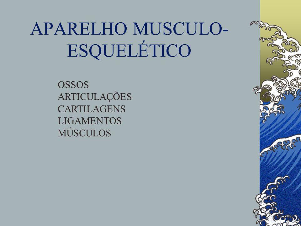 APARELHO MUSCULO- ESQUELÉTICO OSSOS ARTICULAÇÕES CARTILAGENS LIGAMENTOS MÚSCULOS