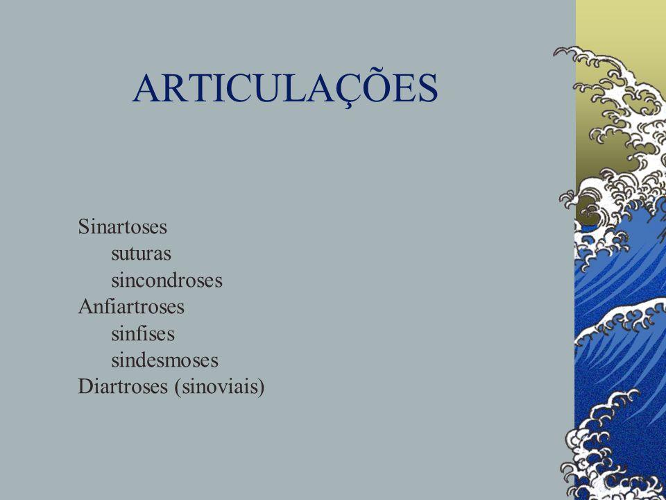 ARTICULAÇÕES Sinartoses suturas sincondroses Anfiartroses sinfises sindesmoses Diartroses (sinoviais)