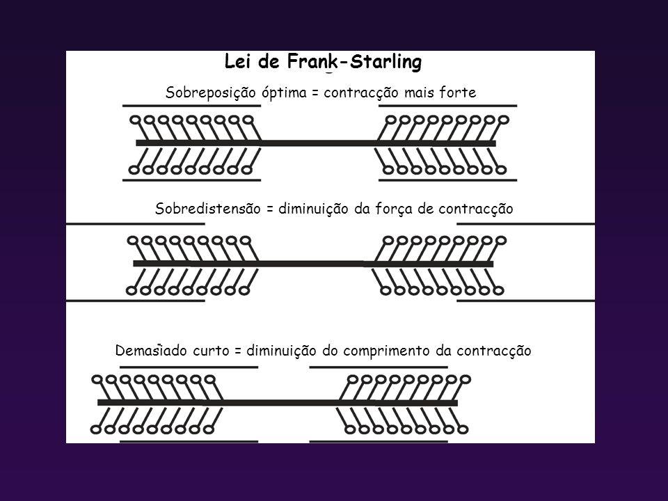 Sobredistensão = diminuição da força de contracção Sobreposição óptima = contracção mais forte Demasiado curto = diminuição do comprimento da contracç