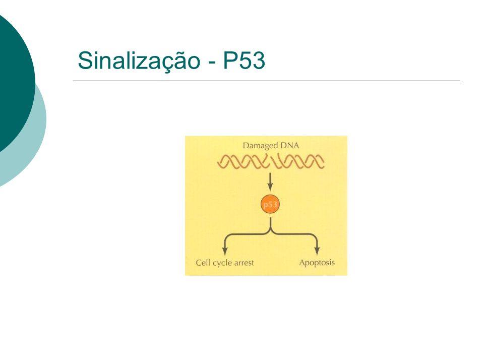 Sinalização - P53