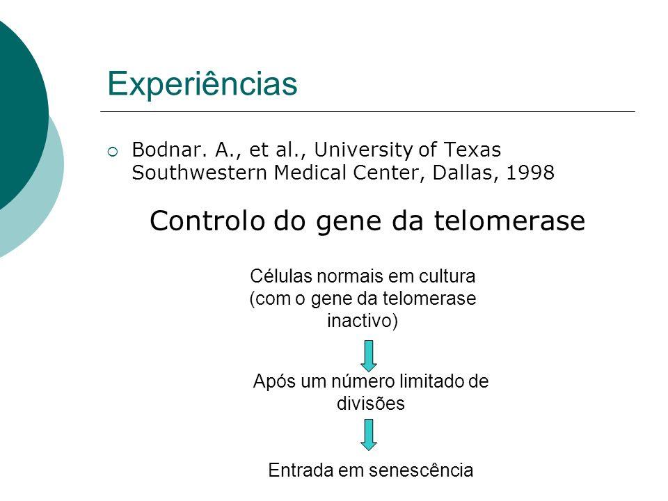 Experiências Bodnar. A., et al., University of Texas Southwestern Medical Center, Dallas, 1998 Controlo do gene da telomerase Células normais em cultu
