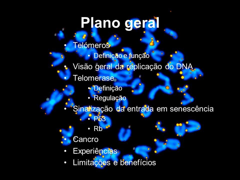 Plano geral Telómeros Definição e função Visão geral da replicação do DNA Telomerase Definição Regulação Sinalização da entrada em senescência P53 Rb