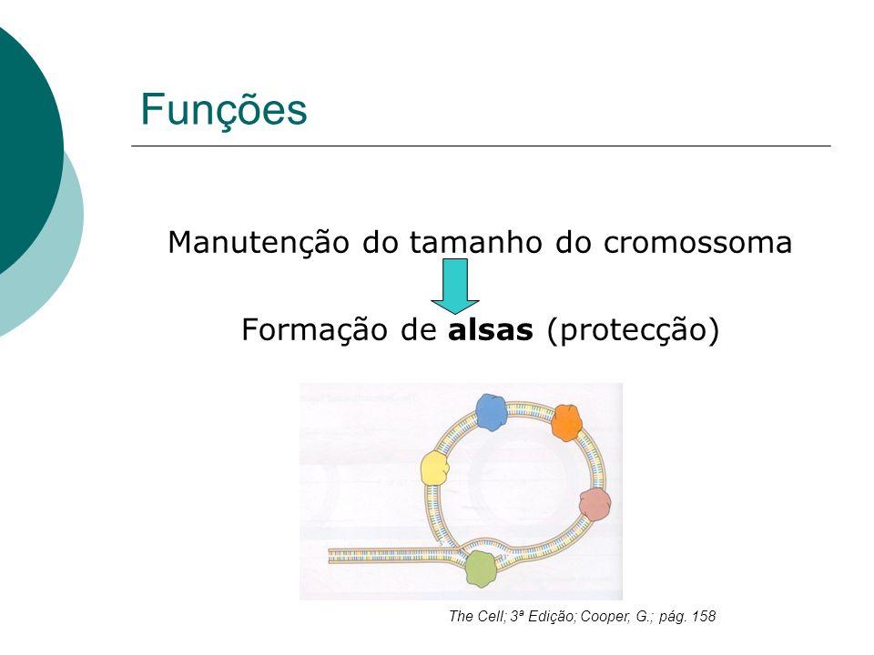 Funções Manutenção do tamanho do cromossoma Formação de alsas (protecção) The Cell; 3ª Edição; Cooper, G.; pág. 158