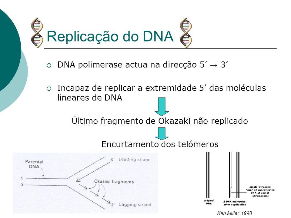 Replicação do DNA DNA polimerase actua na direcção 5 3 Incapaz de replicar a extremidade 5 das moléculas lineares de DNA Último fragmento de Okazaki n