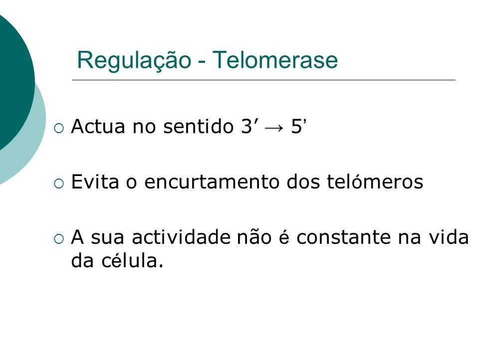 Regulação - Telomerase Actua no sentido 3 5 Evita o encurtamento dos tel ó meros A sua actividade não é constante na vida da c é lula.