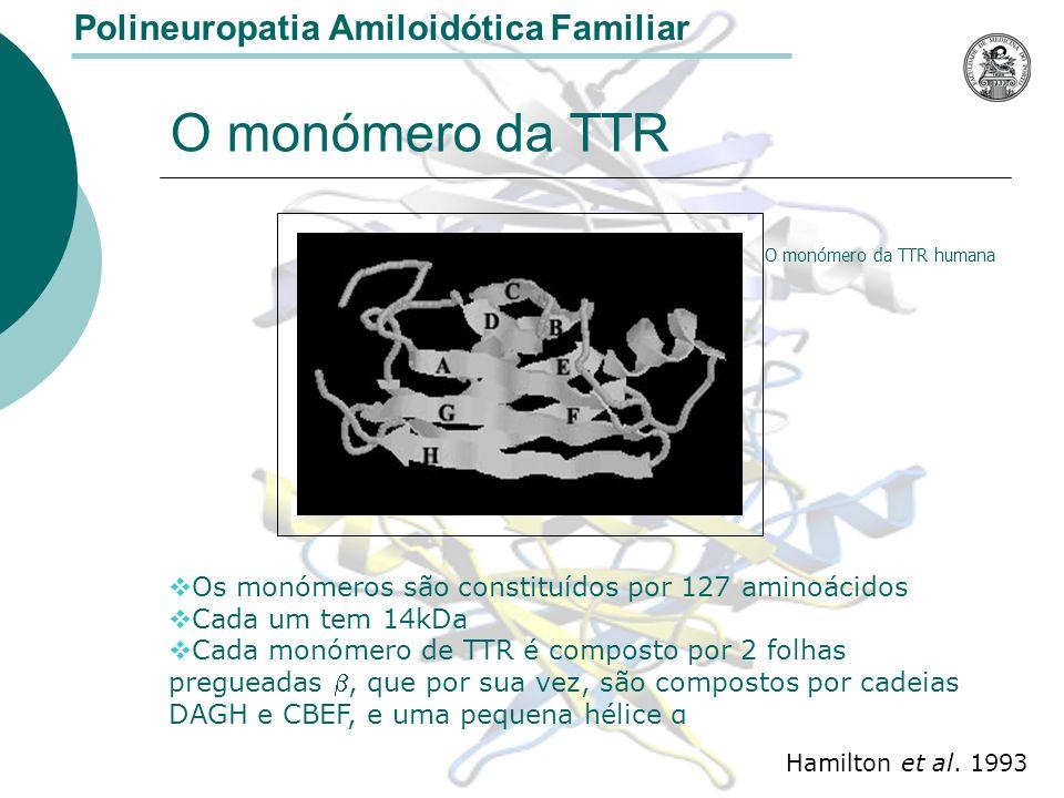 O monómero da TTR O monómero da TTR humana Os monómeros são constituídos por 127 aminoácidos Cada um tem 14kDa Cada monómero de TTR é composto por 2 folhas pregueadas, que por sua vez, são compostos por cadeias DAGH e CBEF, e uma pequena hélice α Hamilton et al.