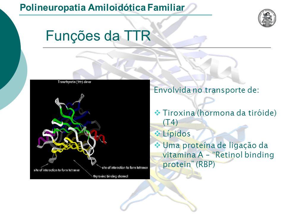 Funções da TTR Envolvida no transporte de: Tiroxina (hormona da tiróide) (T4) Lípidos Uma proteína de ligação da vitamina A – Retinol binding protein (RBP) Polineuropatia Amiloidótica Familiar