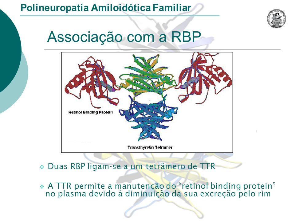 Associação com a RBP Duas RBP ligam-se a um tetrâmero de TTR A TTR permite a manutenção do retinol binding protein no plasma devido à diminuição da sua excreção pelo rim Polineuropatia Amiloidótica Familiar
