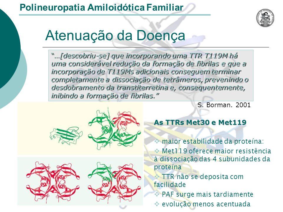 Atenuação da Doença As TTRs Met30 e Met119 maior estabilidade da proteína: Met119 oferece maior resistência à dissociação das 4 subunidades da proteína TTR não se deposita com facilidade PAF surge mais tardiamente evolução menos acentuada Polineuropatia Amiloidótica Familiar …[descobriu-se] que incorporando uma TTR T119M há uma considerável redução da formação de fibrilas e que a incorporação de T119Ms adicionais conseguem terminar completamente a dissociação de tetrâmeros, prevenindo o desdobramento da transtiterretina e, consequentemente, inibindo a formação de fibrilas.…[descobriu-se] que incorporando uma TTR T119M há uma considerável redução da formação de fibrilas e que a incorporação de T119Ms adicionais conseguem terminar completamente a dissociação de tetrâmeros, prevenindo o desdobramento da transtiterretina e, consequentemente, inibindo a formação de fibrilas.