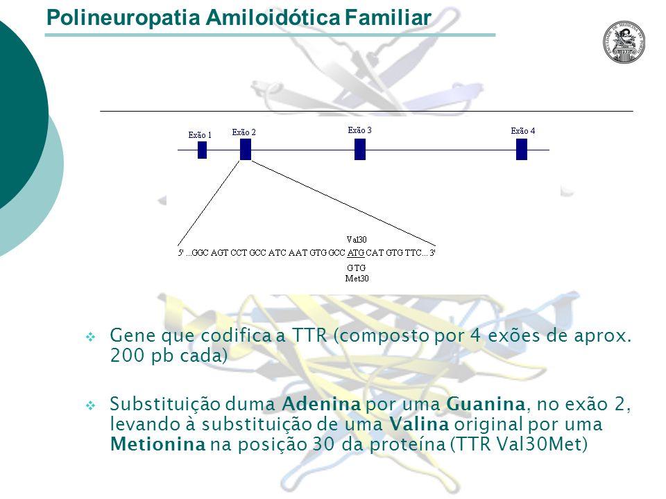 Outras mutações do gene Polineuropatia Amiloidótica Familiar Existem cerca de 80 diferentes substituições de aminoácidos devidas a mutações no gene da TTR estando a maioria associadas com a PAF.