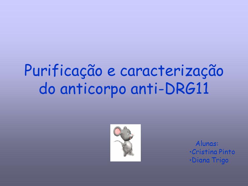 Purificação e caracterização do anticorpo anti-DRG11 Alunas: Cristina Pinto Diana Trigo