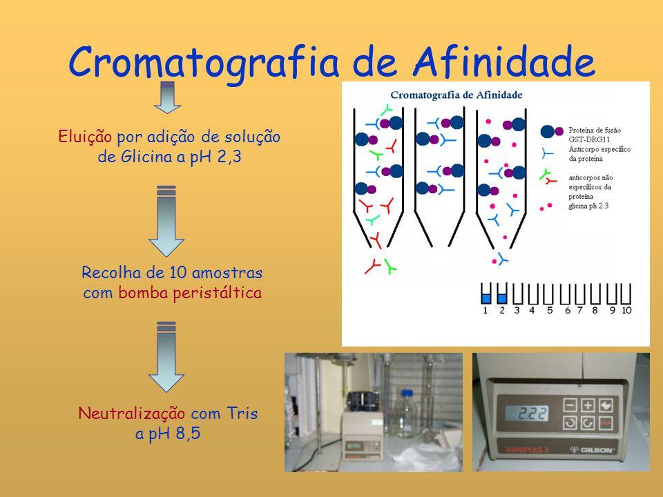 Doseamento Proteico: Método de Bradford Princípio: o reagente de Bradford (corante de azul de Coomassie em àcido fosfórico) liga-se covalentemente às proteínas, numa reacção acompanhada de alteração da cor do reagente em meio ácido.