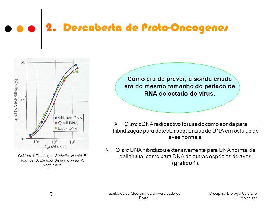 Disciplina Biologia Celular e Molecular Faculdade de Medicina da Universidade do Porto 5 2.Descoberta de Proto-Oncogenes Como era de prever, a sonda c