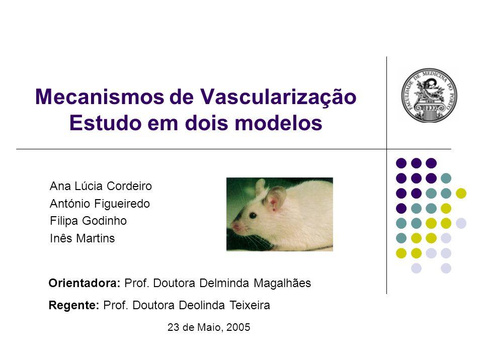 Mecanismos de Vascularização Estudo em dois modelos Ana Lúcia Cordeiro António Figueiredo Filipa Godinho Inês Martins Orientadora: Prof. Doutora Delmi