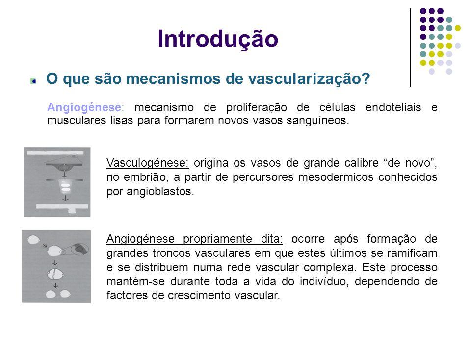 Introdução O que são mecanismos de vascularização? Angiogénese: mecanismo de proliferação de células endoteliais e musculares lisas para formarem novo