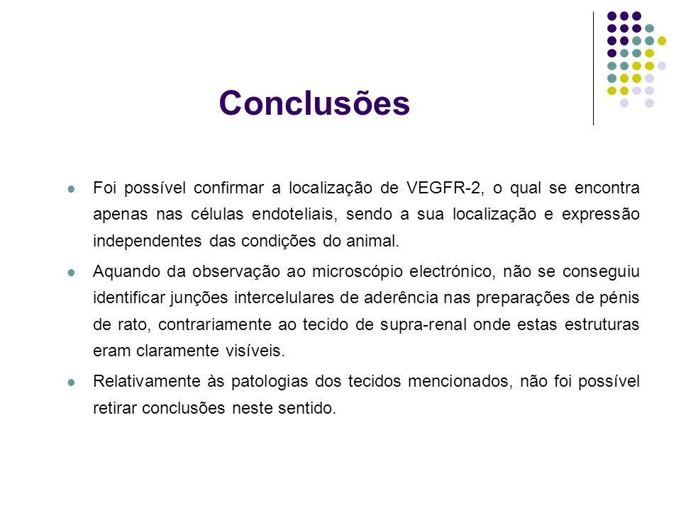 Conclusões Foi possível confirmar a localização de VEGFR-2, o qual se encontra apenas nas células endoteliais, sendo a sua localização e expressão ind