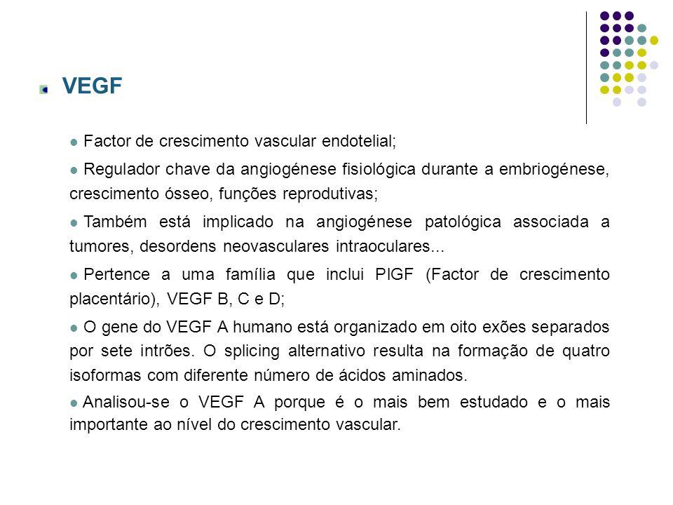 Receptor de VEGF (VEGFR) Os efeitos biológicos do VEGF são mediados por dois receptores: VEGFR-1 e VEGFR-2, ambos com acção da cínase da tirosina.