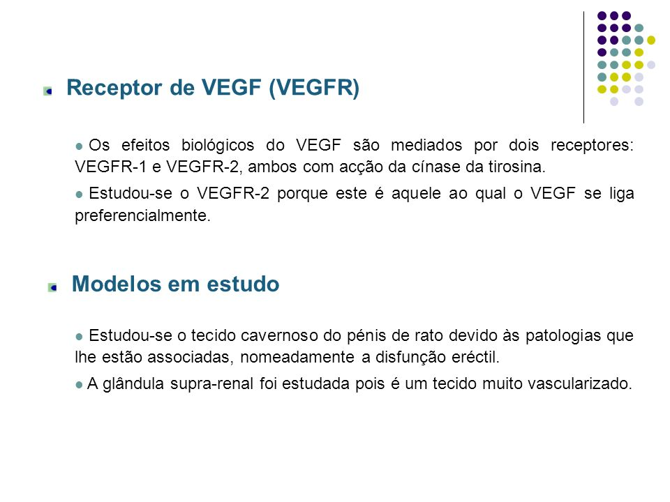 Receptor de VEGF (VEGFR) Os efeitos biológicos do VEGF são mediados por dois receptores: VEGFR-1 e VEGFR-2, ambos com acção da cínase da tirosina. Est