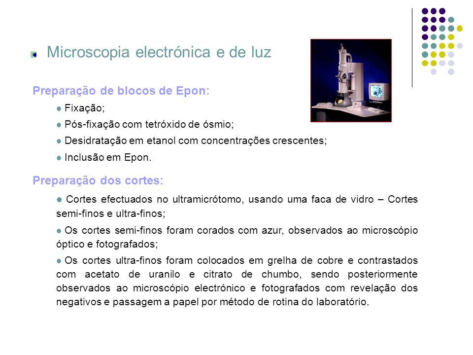 Microscopia electrónica e de luz Preparação dos cortes: Cortes efectuados no ultramicrótomo, usando uma faca de vidro – Cortes semi-finos e ultra-fino