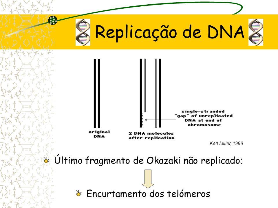 Replicação de DNA DNA polimerase 5 3, 2 cadeias Rápida Lenta fragmentos de Okazaki (5- 3) Ken Miller, 1998