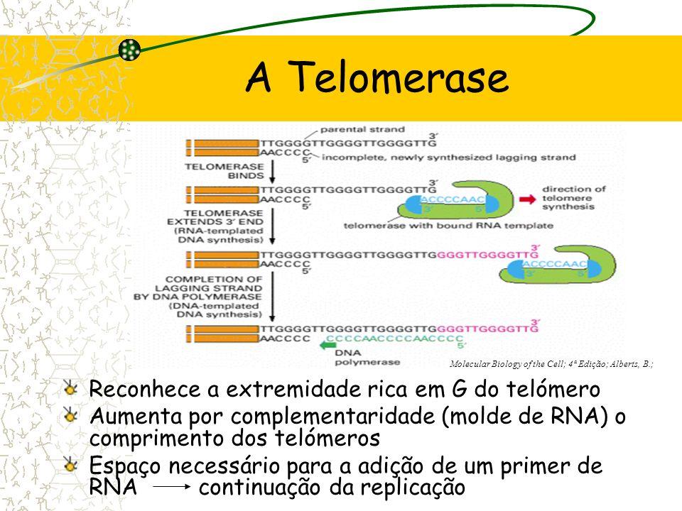 Telomerase transcriptase reversa ribonucleoproteína (RNP) Molécula de RNA AAUCCC Complementar à repetição telomérica Parte proteica www.google.pt