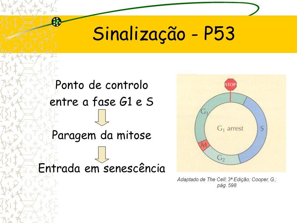 Sinalização - P53 Molecular Biology of the Cell; 4ª Edição; Alberts, B.;