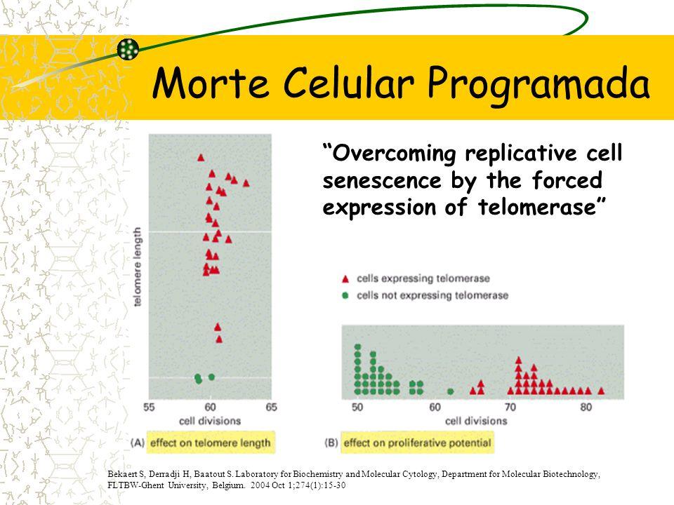 Sinalização - P53 Ponto de controlo entre a fase G1 e S Paragem da mitose Entrada em senescência Adaptado de The Cell; 3ª Edição; Cooper, G.; pág. 598