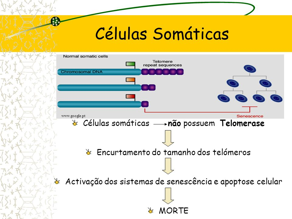 Morte Celular Programada Overcoming replicative cell senescence by the forced expression of telomerase Bekaert S, Derradji H, Baatout S. Laboratory fo