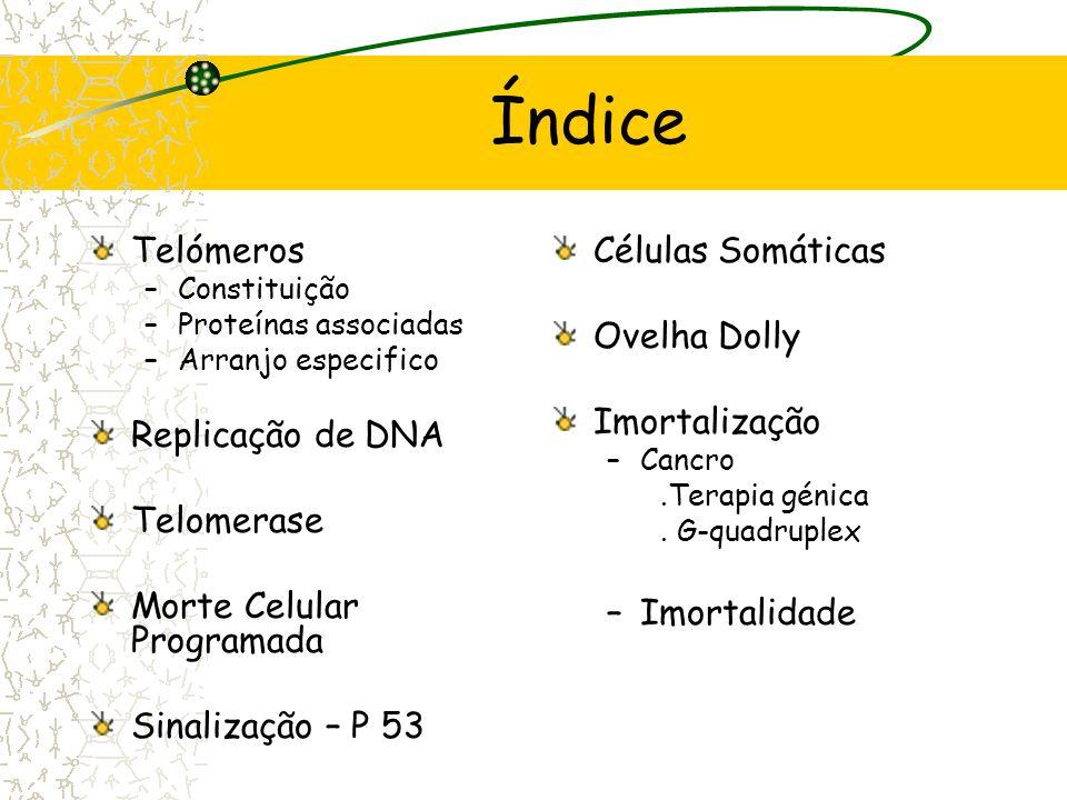 Telómeros e Imortalização David Moreira, T5 Manuela Fernandes, T14 Ricardo Coelho, T16 Faculdade de Medicina da Universidade do Porto