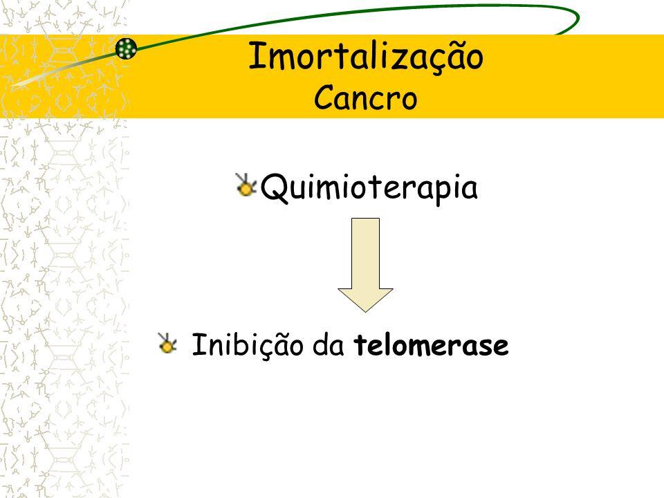 Imortalização Cancro Células cancerígenas Telomerase Manutenção do tamanho dos telómeros Sistemas de senescência e apoptose celular não são activados