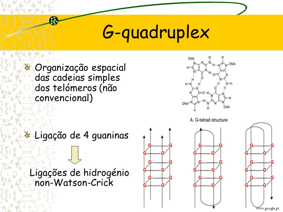 Procedimentos de terapia génica utilizados na cura contra o cancro: Adição de ribozimas que clivem a cadeia molde; Competição pela introdução de uma t