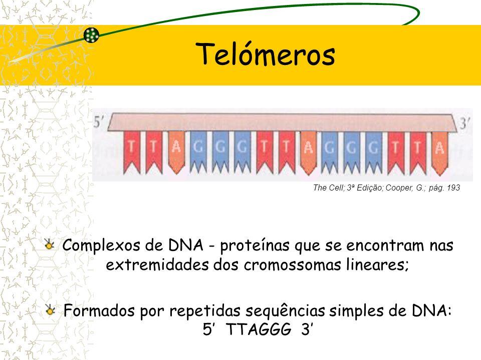 Índice Telómeros –Constituição –Proteínas associadas –Arranjo especifico Replicação de DNA Telomerase Morte Celular Programada Sinalização – P 53 Célu