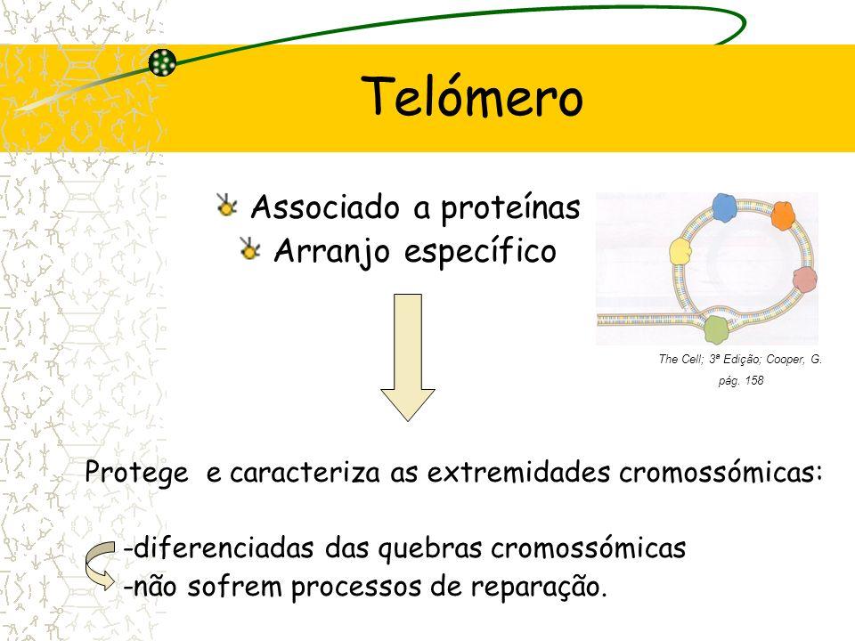 Telómeros Complexos de DNA - proteínas que se encontram nas extremidades dos cromossomas lineares; Formados por repetidas sequências simples de DNA: 5