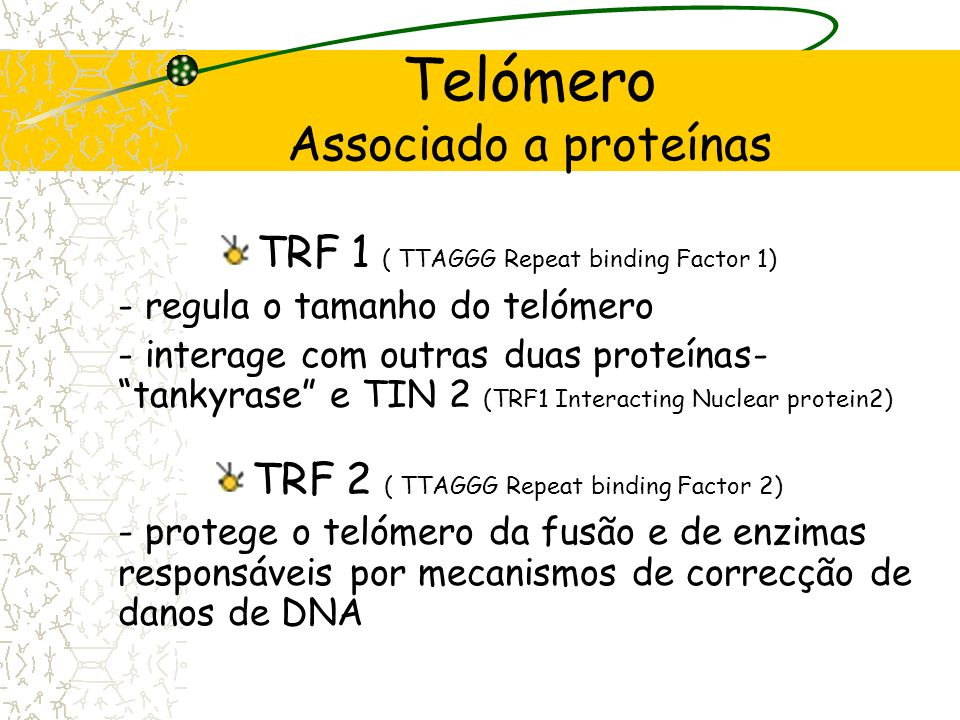 Telómero Associado a proteínas Arranjo específico Protege e caracteriza as extremidades cromossómicas: -diferenciadas das quebras cromossómicas -não s