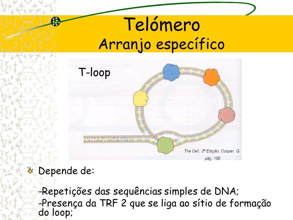 Telómero Arranjo específico Molecular Biology of the Cell; 4ª Edição; Alberts, B.;