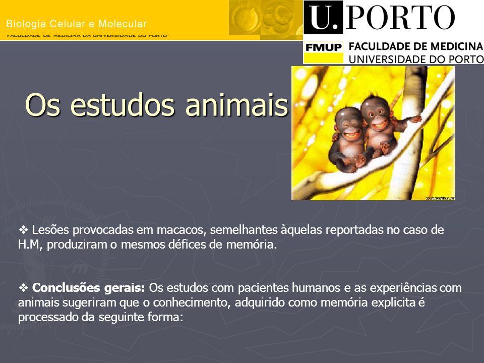 Os estudos animais Os estudos animais Lesões provocadas em macacos, semelhantes àquelas reportadas no caso de H.M, produziram o mesmos défices de memó