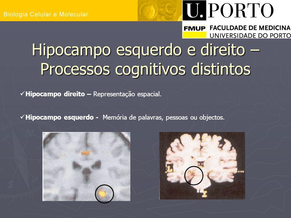 Hipocampo esquerdo e direito – Processos cognitivos distintos Hipocampo direito – Representação espacial. Hipocampo esquerdo - Memória de palavras, pe