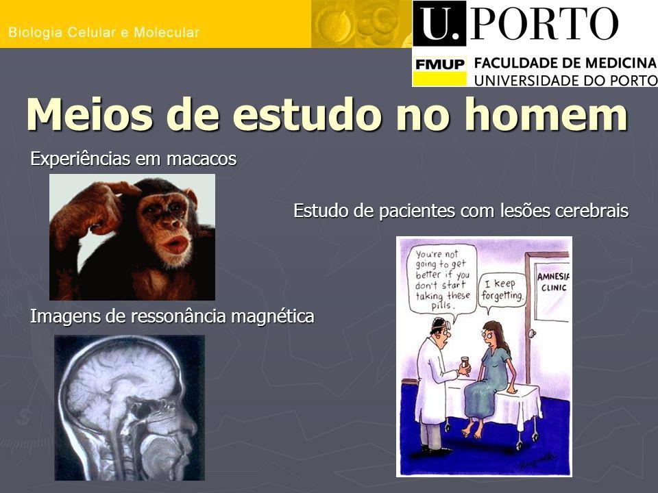 Meios de estudo no homem Experiências em macacos Estudo de pacientes com lesões cerebrais Imagens de ressonância magnética