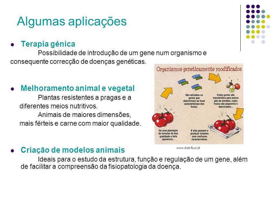 Técnica de produção de proteínas recombinantes Isolar e preparar o DNA; Escolher o vector apropriado; O fragmento de DNA a clonar é introduzido em vectores de clonagem, formando-se o DNA recombinante.